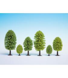 Широколистни дървета, 5 бр., 5 - 9 cm