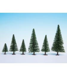 Елхови дървета, 50 бр., 5 - 14 cm