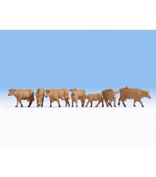 Крави, кафяви