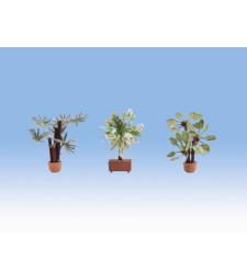 Средиземноморски растения (3 броя)