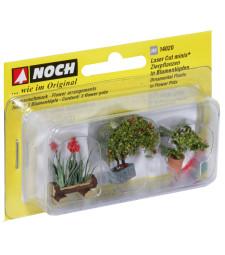 Декоративни растения в саксии