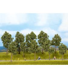 Летни дървета - 10 бр. дръвчета 10 - 14 cm
