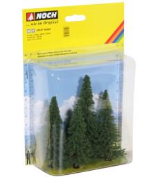 Елхови дървета - 4 бр. (8 - 12 cm)