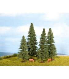 Елхови дървета - 4 бр. (4 - 8 cm)