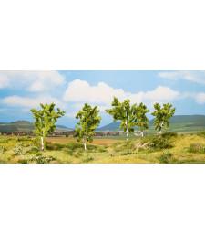Крушово дърво - 8 и 10 см високи, 5 броя - TREE CUBE