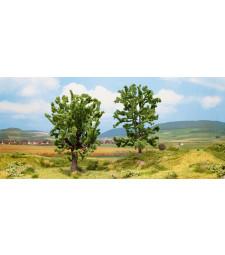 Дъб и акация - високи 15 см - TREE CUBE